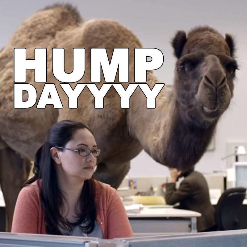 Hump Day Camel Pictures Photos And Images For Facebook