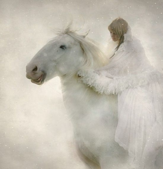 White Horse Pictures, Photos, and Images for Facebook ...