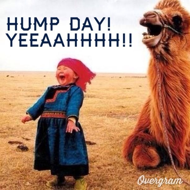 Hump Day Yeah Pictures, Photos, and Images for Facebook ...