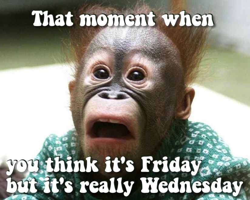 ? 25  Best Memes About Its Only Wednesday | Its Only Wednesday Memes