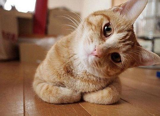 Did Curiosity Really Kill the Cat?