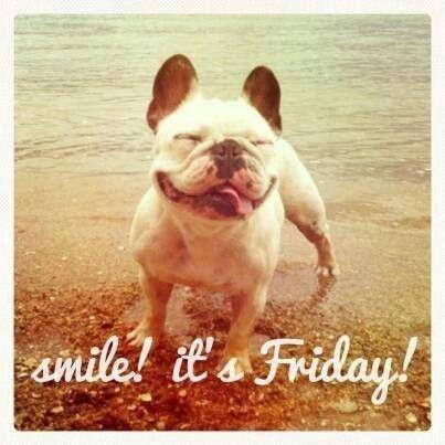Smile Dog Quotes. QuotesGram