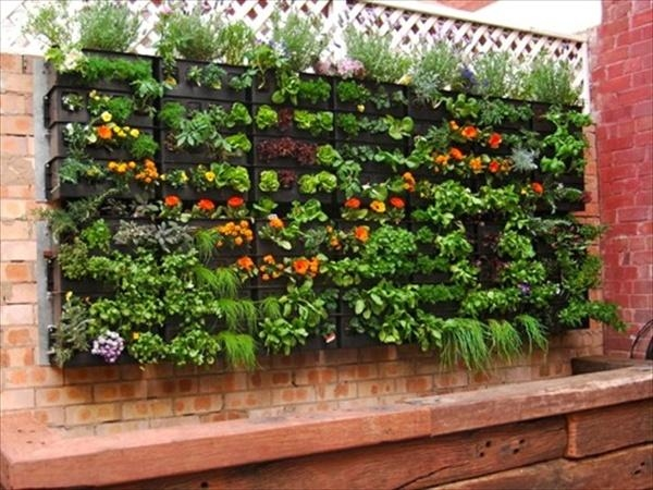 Pallet Vertical Garden Pictures Photos And Images For Facebook Tumblr Pinterest And Twitter