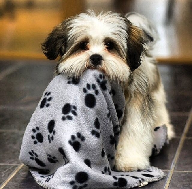 Cute Little Puppy Pictures, Photos, and Images for Facebook, Tumblr ...