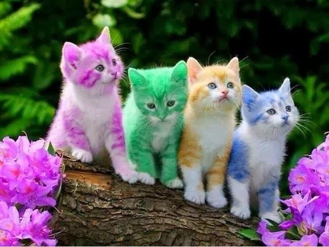 rainbow cat wallpapers - photo #39
