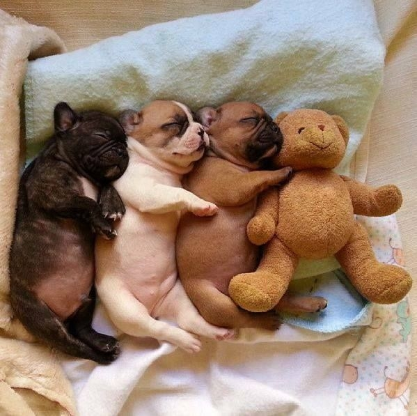 Snuggle With You: Snuggle Puppies Pictures, Photos, And Images For Facebook