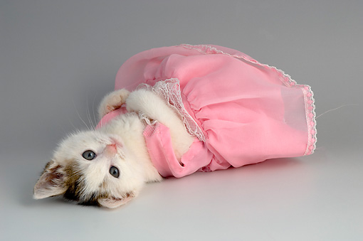 Pretty in pink princess kitty pictures photos and images - Princesse kitty ...