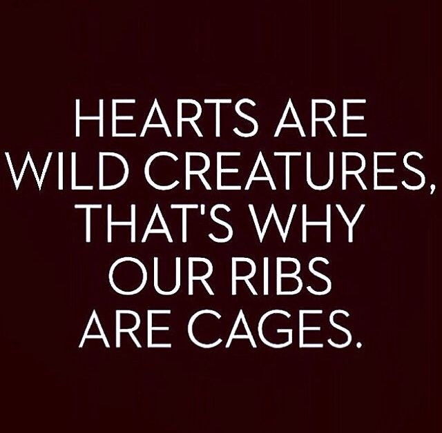 hearts are wild creatures pictures photos and images for