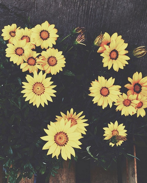 Vintage Sunflowers Pictures Photos And Images For Facebook