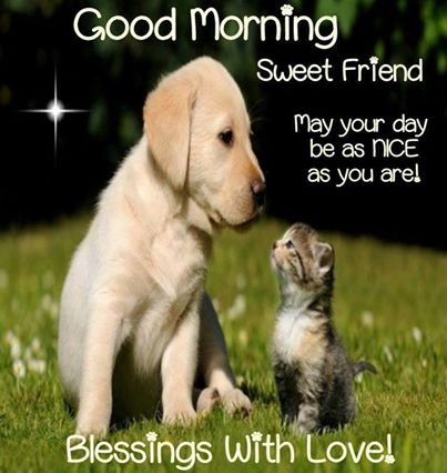 Image result for good evening puppies & kittens