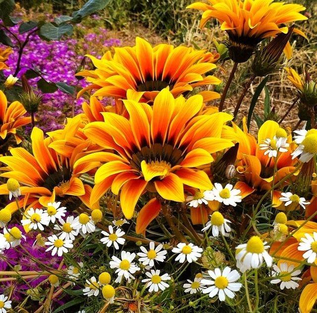 Resultado de imagen de flower animated pinterest