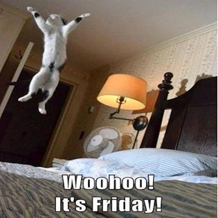 woo hoo friday - Bing images