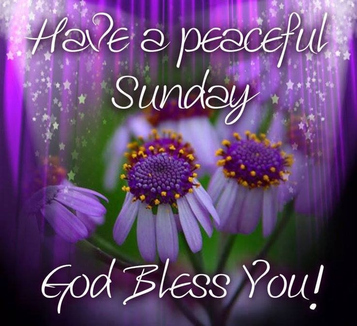 Good Morning Happy Palm Sunday : Have a peaceful sunday pictures photos and images for