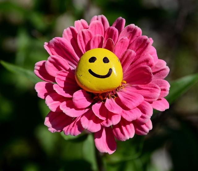 приманкой для цветочки с улыбкой картинки вишни сорта звезда