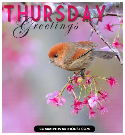 Thursday greetings pictures photos and images for facebook tumblr thursday greetings m4hsunfo Gallery