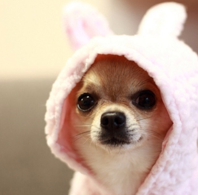 Cute Puppy Hood Photos