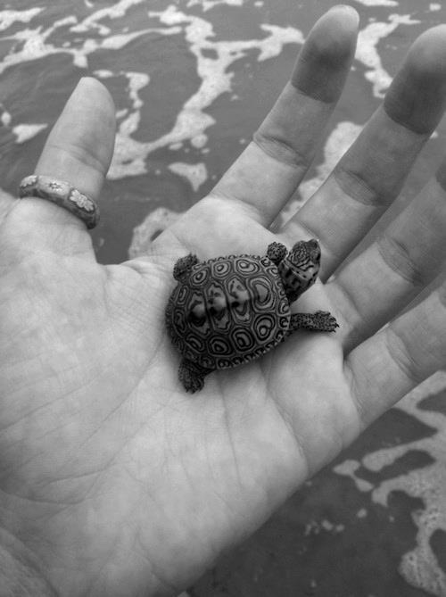tiny turtle pictures photos and images for facebook