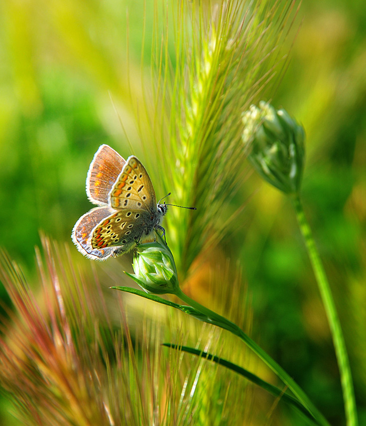 Natures Best Photo Magazine
