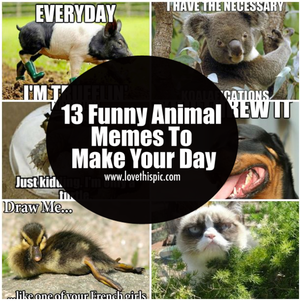 Funny Memes For Kids Animals : Funny animal memes to make your day