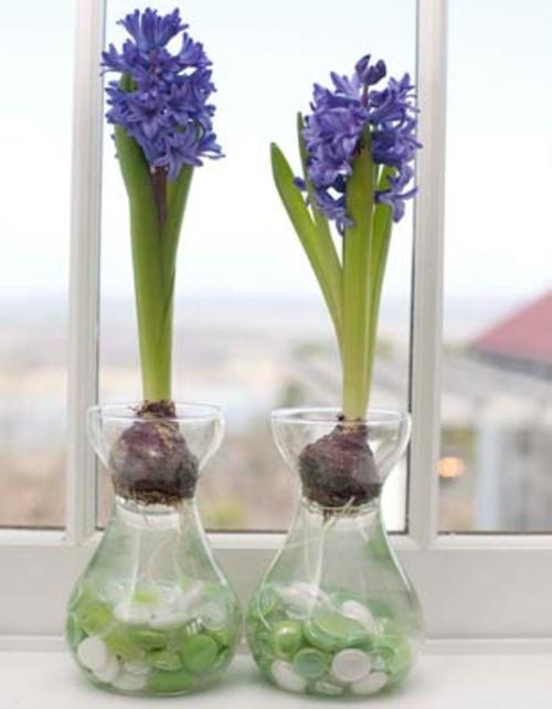 5 Diy Spring Indoor Plants