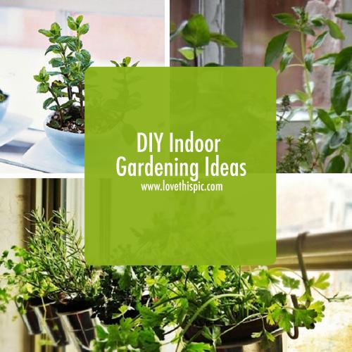 Diy indoor gardening ideas for Indoor gardening for seniors