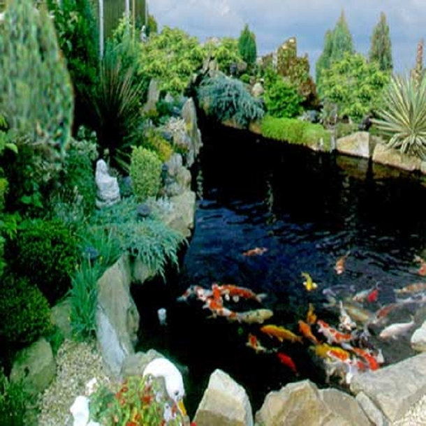 10 garden aquarium ideas and projects for Pond surround ideas