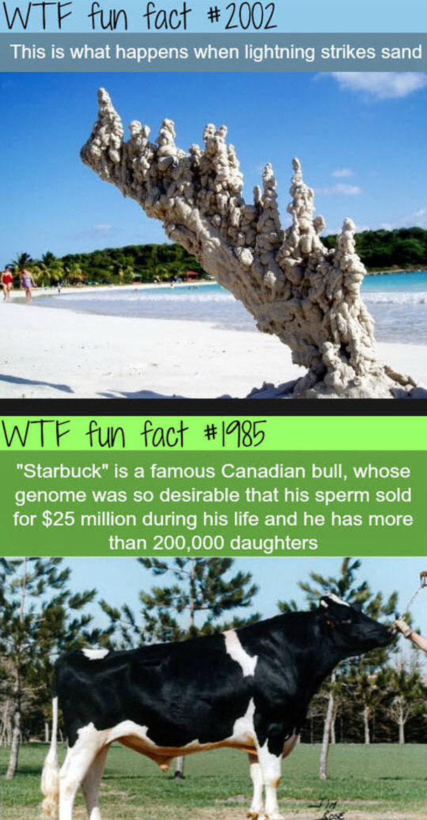 12 interesting wtf fun facts