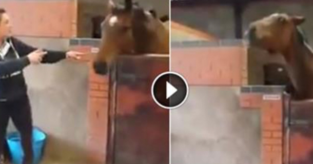 """Image result for She Starts Dancing To """"All About That Bass,"""" Now Watch What Her Horse Does …I'm CRYING!"""
