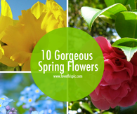10 Gorgeous Spring Flowers