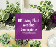 DIY Living Plant Wedding Centerpieces