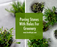 Paving Stones With Holes For Greenery