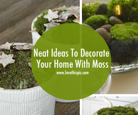 Neat Ideas To Decorate Your Home With Moss