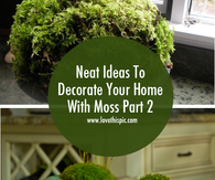 Neat Ideas To Decorate Your Home With Moss Part 2