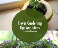 Clever Gardening Tips And Ideas