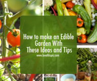 How to make an Edible Garden With These Ideas and Tips