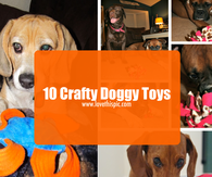 10 Crafty Doggy Toys