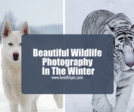 Beautiful Wildlife Photography In The Winter