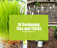 10 Gardening Tips and Tricks