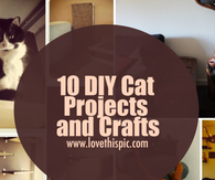 10 DIY Cat Projects and Crafts
