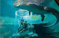 Crocosaurus Cove Aquarium, Australia