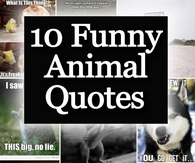 10 Funny Animal Quotes