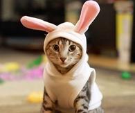 Cute Kitten In Bunny Outfit