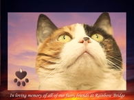 in loving memory of our furry friends at rainbow bridge
