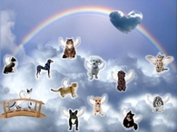 dogs and cat at rainbow bridge