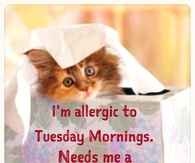 Allergic to Tuesday Mornings