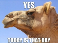 It's Humpday