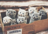 Box full of kittens