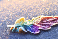 Frozen colorful leaf