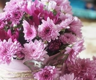 Pink Mums in Tin Cans