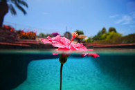 Flower in the Pool